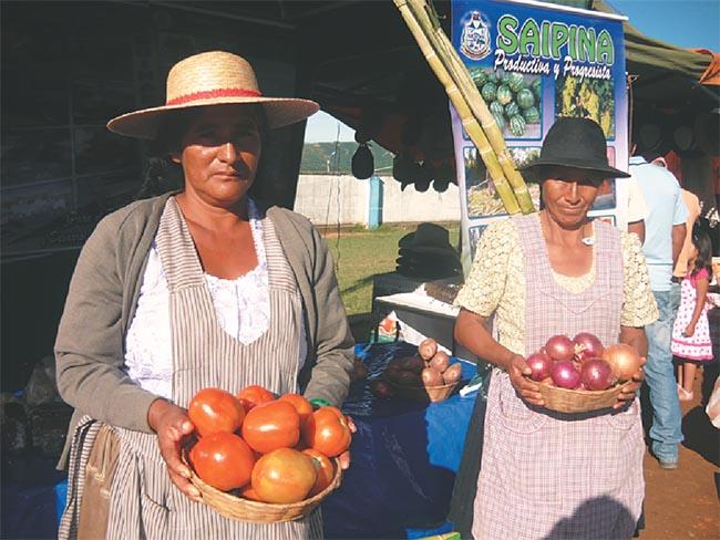 Crece el potencial agrícola   en la             provincia Vallegrande