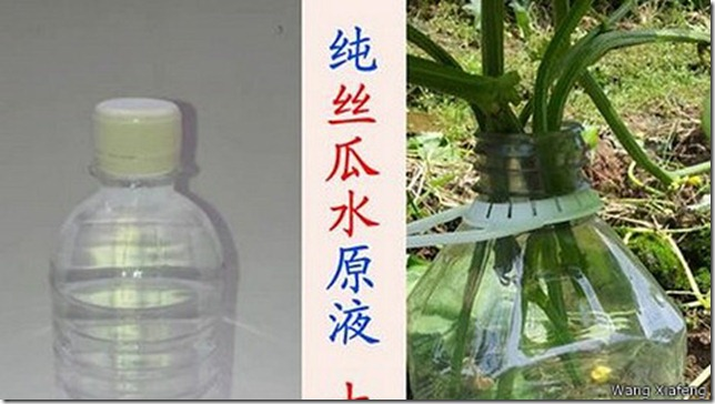 vegetables_and_luffa_water