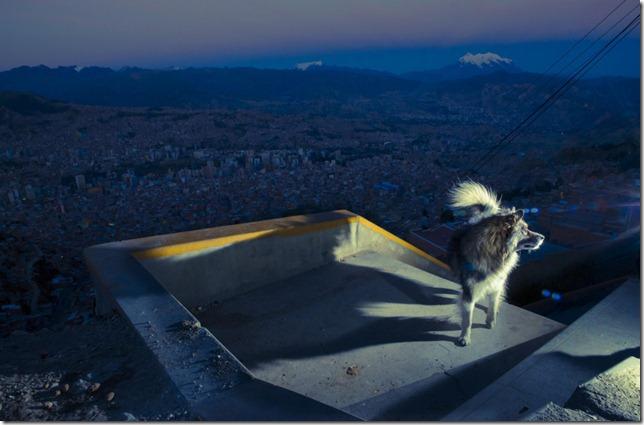 BOLIVIAN-STREET-DOGS