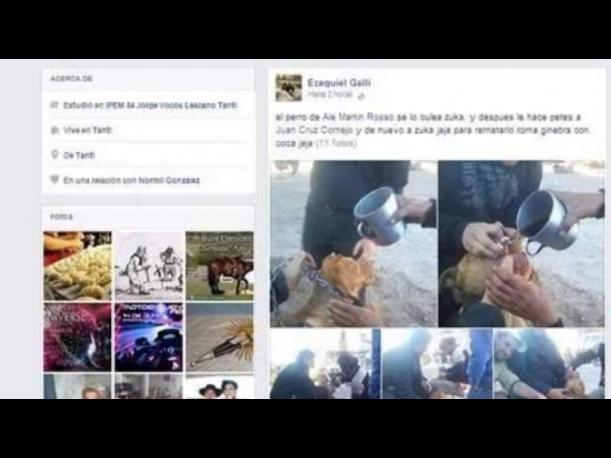 Argentina: 'Alcoholizan' a perro y luego suben la foto a Facebook
