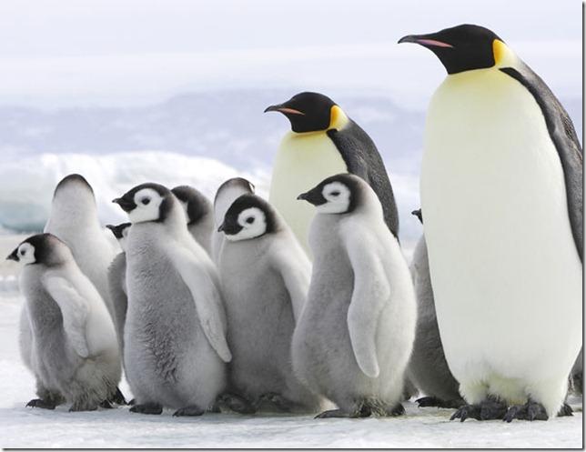 slide-pinguino