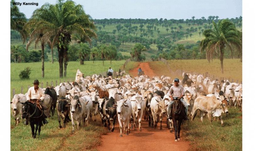 En Sana Cruz, existen 28 mil ganaderos.
