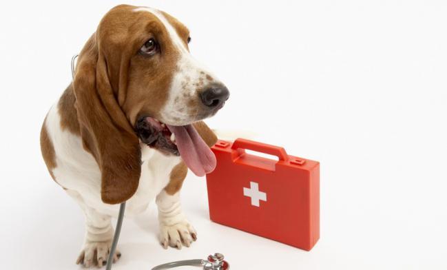 Diarrea y perdida de peso en perros