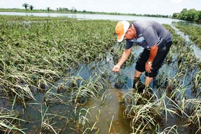 El Seguro Agrario cubrió a menos afectados este año