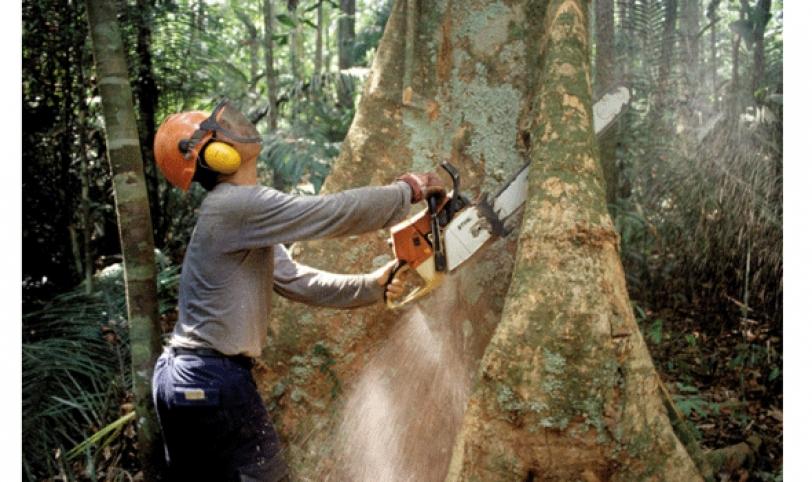 informe. Las importaciones de madera en los últimos años ha superado a las exportaciones, el sector forestal pide mejores condiciones al Gobierno.