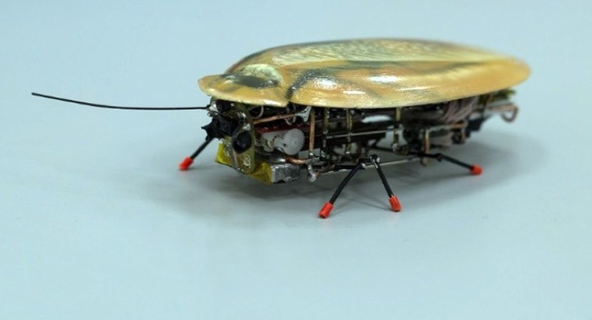 robot cucaracha 830x449 Investigadores rusos desarrollan unas curiosas cucarachas robot