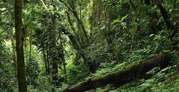 La Reserva Nacional de Flora y Fauna de Tariquía se encuentra en las provincias tarijeñas de O'Connor, Arce, Gran Chaco y Cercado
