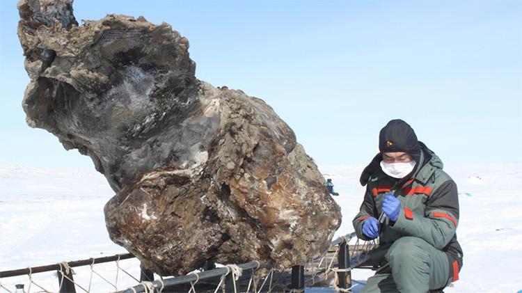 Investigador de la expedición 'Oecumene del Norte' con restos de un mamut