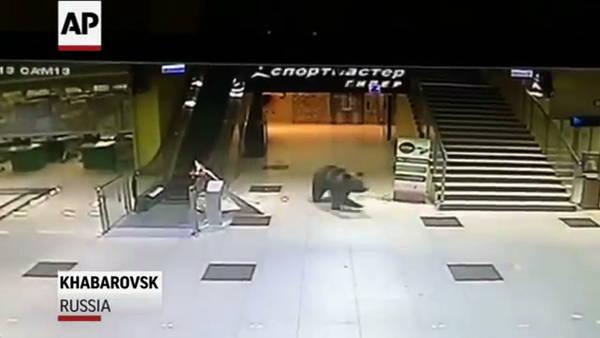 Un oso es abatido en Rusia tras colarse en un centro comercial