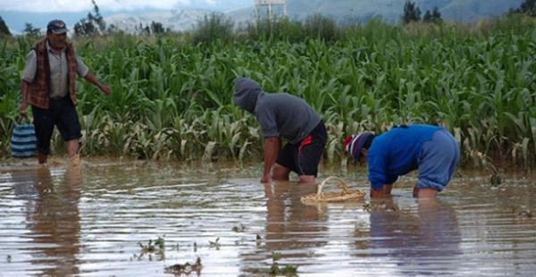 El Seguro Agrario tiene el objetivo de proteger a los productores agrícolas más pobres del país afectados por lluvias, granizos, inundaciones, heladas o sequías