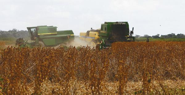 Biotecnología. Con su uso el rendimiento de soya puede crecer un 20%