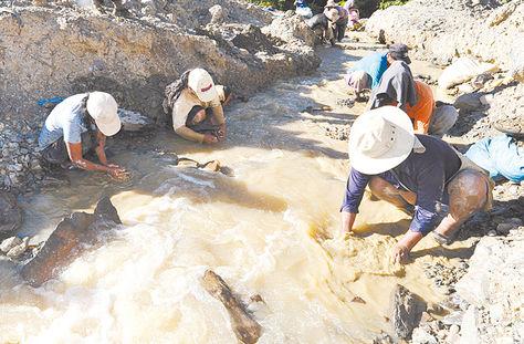 Yacimiento. Cooperativistas extraen el mineral dorado en Larecaja. Foto: Archivo