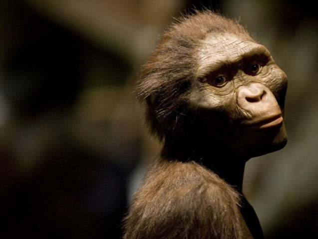 """HOUSTON  - AUGUST 28:  A sculptor's rendering of the hominid Australopithecus afarensis is displayed as part of an exhibition that includes the 3.2 million year old fossilized remains of """"Lucy"""", the most complete example of the species, at the Houston Museum of Natural Science, August 28, 2007 in Houston, Texas. The exhibition is the first for the fossil outside of Ethiopia and has generated criticism among the museum community and others that believe the fossil is too fragile to be moved from it's home country. (Photo by Dave Einsel/Getty Images)"""