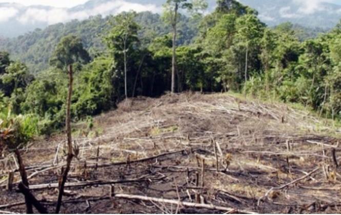 La Fundación Tierra propone implementar acciones para evitar una crisis alimentaria