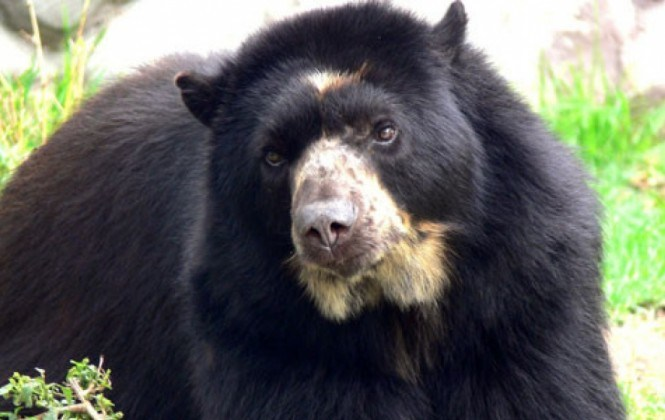 WWF elige al jucumari como la especie que más apoyo necesita en la región
