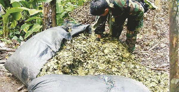 crisis en digcoin el organismo inició una investigación interna sobre el incidente El transporte de hojas de coca está regulado en el país, pero los controles son débiles