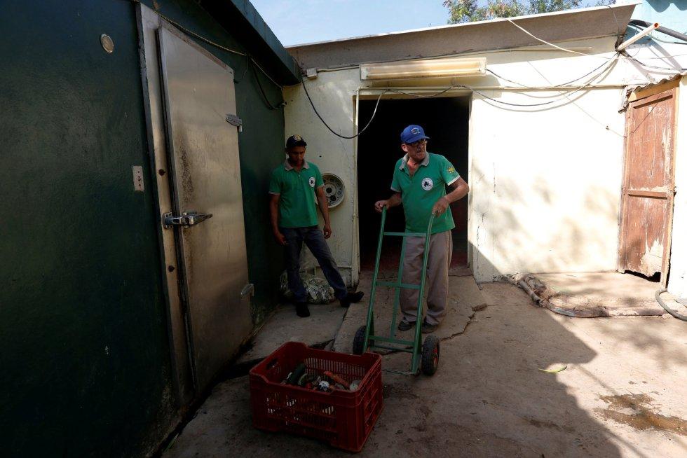 En Venezuela, la inmensa mayoría de los zoos y parques son públicos y están administrados por funcionarios. En consecuencia, la entrada al público es gratuita y dependen de los ingresos del Gobierno para poder funcionar. En la imagen, trabajadores transportan comida donada en el zoo Paraguaná de Punto Fijo, el 22 de julio de 2016.