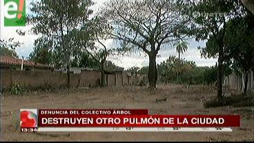 Colectivo ecológico denuncia tala de árboles
