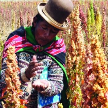 Advierten sobre el riesgo de la inseguridad alimentaria en el país