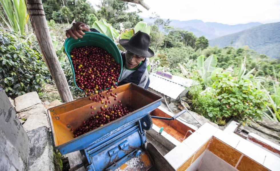 Raúl Mamaní, uno de los productores más destacados de café en Perú.