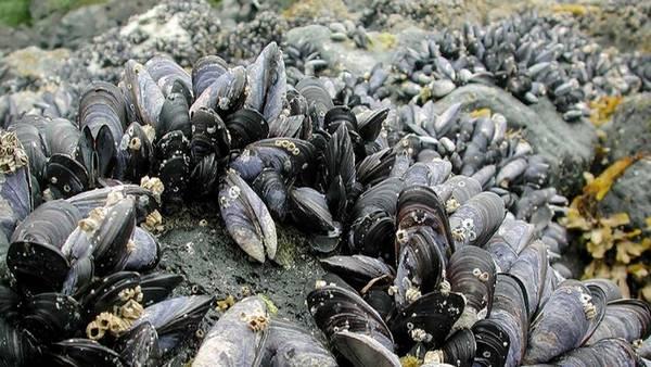 Venden mariscos con radiación procedente de Fukushima./  Archivo