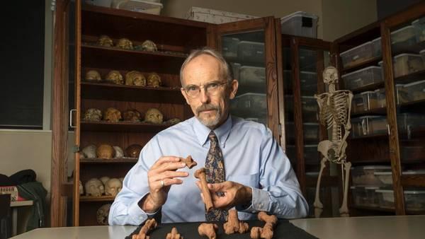 El investigador John Kappelman, de la Universidad de Texas, con piezas de impresión 3D de partes del esqueleto de Lucy. (AFP)