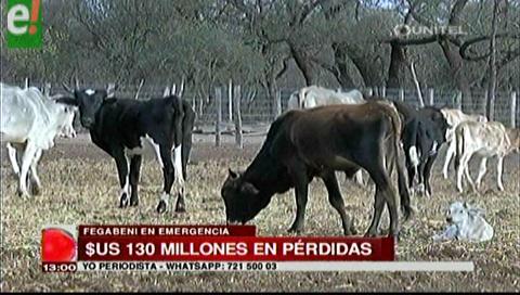 Ganaderos de Beni se declaran en emergencia por la sequía