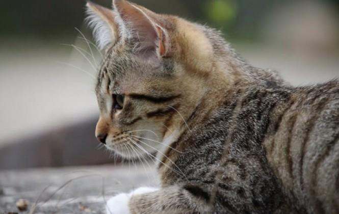 Beni: Un municipio está en emergencia por invasión de ratas, piden donación de gatos