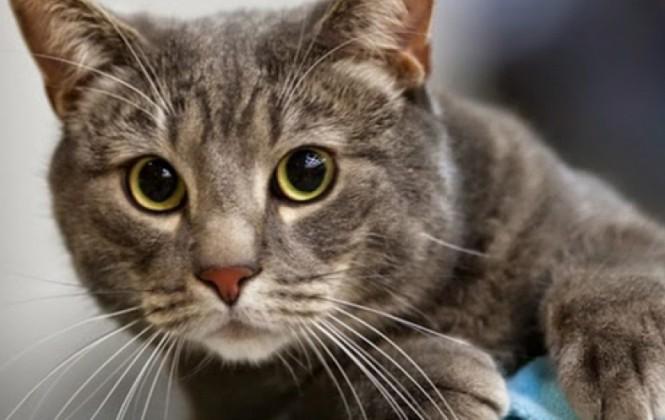 """Arranca la campaña de """"recolección"""" de gatos para afrontar la invasión de ratas en Exaltación"""