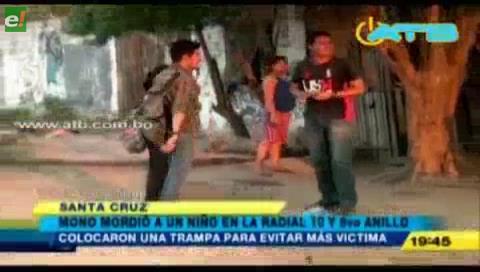 Mono mantiene en vilo a vecinos de Radial 10