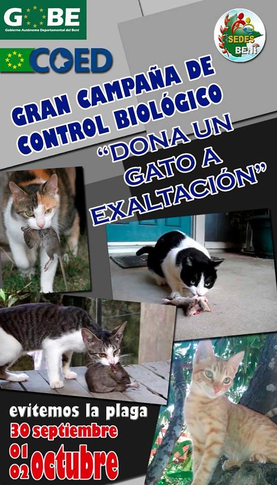 gatos_campana