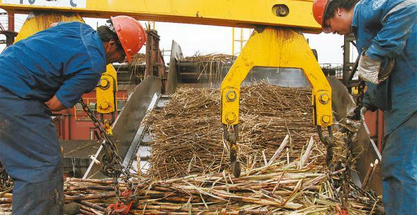 Los productores primarios de la cadena productiva azucarera fueron los más castigados