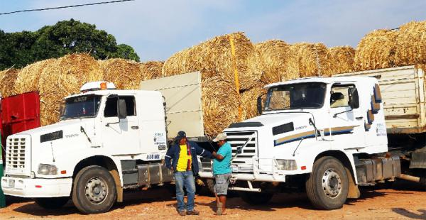 Cada semana, se envían 10 toneladas de forraje por municipio para el ganado