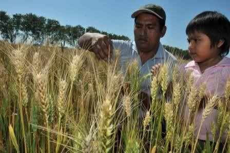 Bolivia-importo-$us-25-millones-en-12-alimentos-que-produce