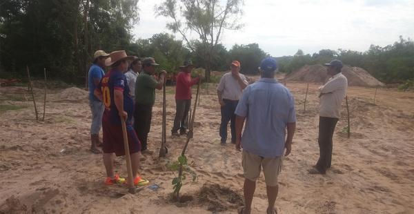 Los propietarios de centros de acopio plantan tajibo, ajo y sauce