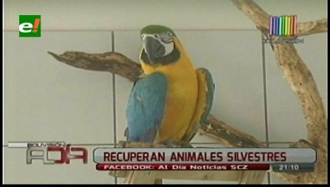 Animales rescatados serán devueltos a la vida silvestre