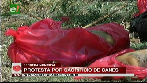 Protesta por el sacrificio de varios canes en la Perrera Municipal de Santa Cruz