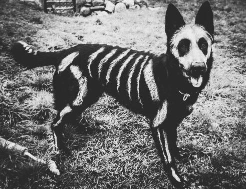 disfraz-de-esqueleto-38-13