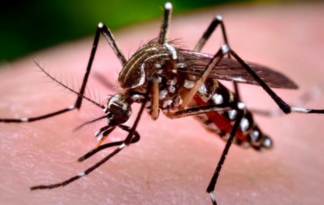 Sedes responsabiliza en más del 90% de los casos a las familias por los brotes del Zika