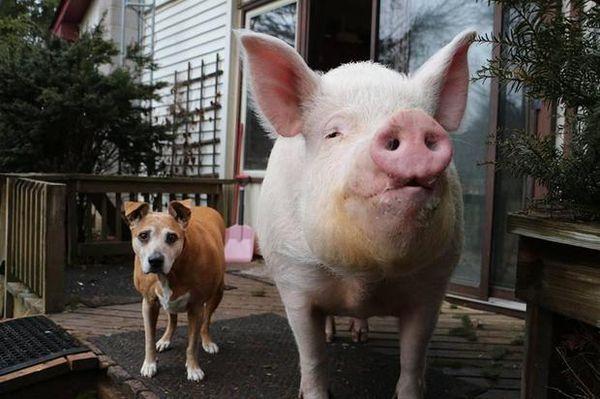 En las afueras de su casa, dos de las mascotas de la familia