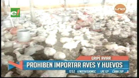Bolivia cierra frontera por gripe aviar y prohíbe importación de aves y huevos de Chile