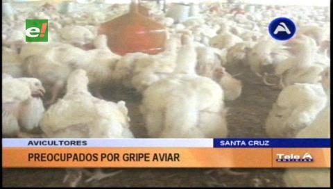 Avicultores piden tranquilidad por gripe aviar