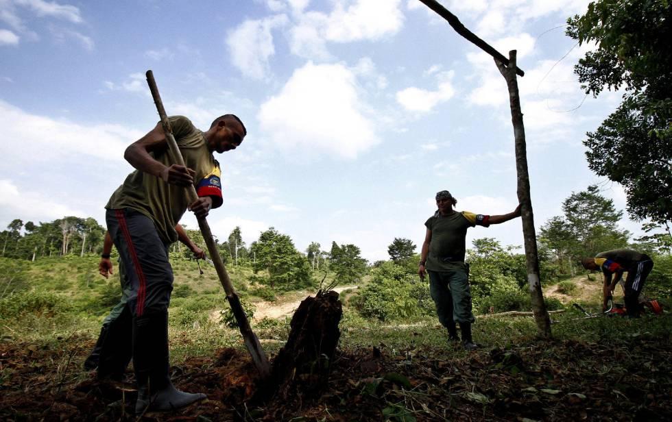 Miembros de las FARC trabajan en una Zona de Agrupamiento.