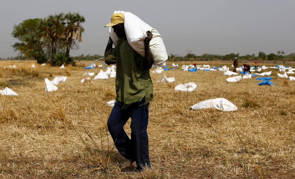 Un hombre recoge un saco con comida tras un lanzamiento desde el aire efectuado este sábado 18 de febrero por el Programa Mundial de Alimentos (PMA-WFP) en la aldea de Rubkuai, en el estado de Unity (Sudán del Sur).