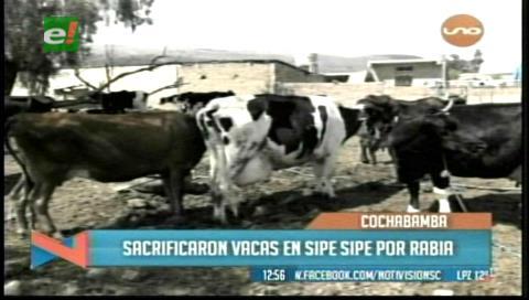 Brote de rabia bovina deja 29 vacas muertas en Sipe Sipe