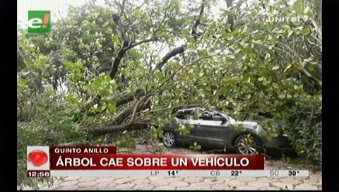 Santa Cruz: Bomberos retiraron árbol que cayó sobre un vehículo