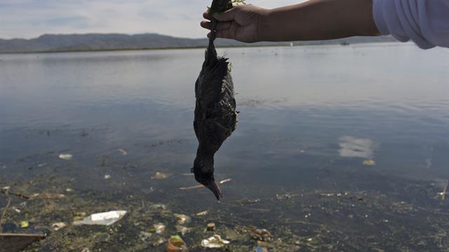 La activista ambiental Maruja Inquilla sostiene un pájaro muerto llamado