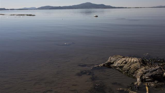 El esqueleto de una oveja yace en la orilla del lago Titicaca, Perú. Según activistas ambientales, el ganado y los cultivos de los aldeanos están muriendo debido a la contaminación.