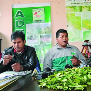 Evo prevé firmar la ley de la coca sin el apoyo de Yungas