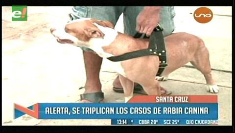 Alerta por incremento en casos de rabia canina en Santa Cruz